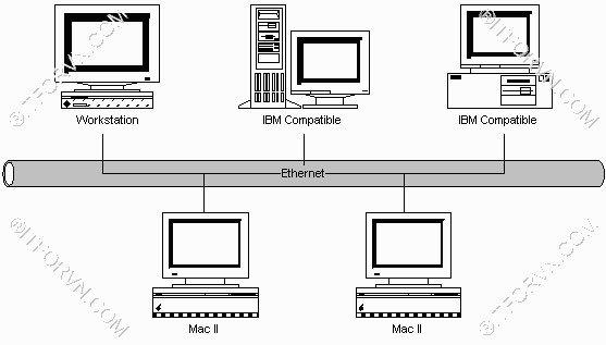 Mô hình bus trong Ethernet LAN - [Tự Học CCNA] – Bài 5: Ethernet LAN và hoạt động chuyển mạch